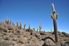 Island Inca Wasi - cactus island Royalty Free Stock Images