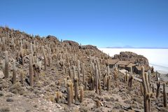 Island Inca Wasi - cactus island. Stock Photography