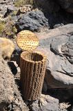 Island Inca Wasi - cactus island.The urn of cactus Stock Photos