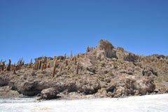 Island Incahuasi  Salar de Uyuni, Bolivia. The island of cactuses on Uyunis saline soil Stock Images