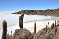 Island Incahuasi  Salar de Uyuni, Bolivia. The island of cactuses on Uyunis saline soil Royalty Free Stock Images