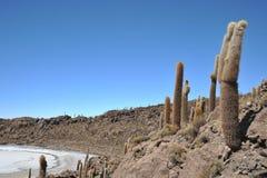 Island Incahuasi  Salar de Uyuni, Bolivia. The island of cactuses on Uyuni's saline soil Stock Image