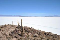 Island Incahuasi  Salar de Uyuni, Bolivia. The island of cactuses on Uyuni's saline soil Royalty Free Stock Images