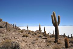 Island Incahuasi  Salar de Uyuni, Bolivia Stock Image