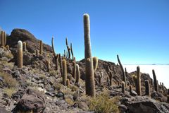 Island Incahuasi  Salar de Uyuni, Bolivia. The island of cactuses on Uyuni's saline soil Stock Photo