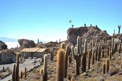 Island Incahuasi  Salar de Uyuni, Bolivia. The island of cactuses on Uyuni's saline soil Royalty Free Stock Image