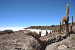Island Incahuasi Salar de Uyuni, Bolivia. The island of cactuses on Uyunis saline soil Stock Photography