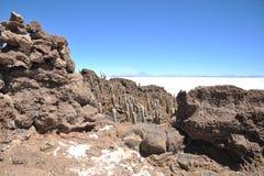 Island Incahuasi Salar de Uyuni, Bolivia Royalty Free Stock Photography