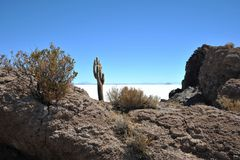 Island Incahuasi Salar de Uyuni, Bolivia. The island of cactuses on Uyunis saline soil Royalty Free Stock Photography