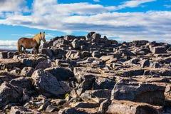 Island Jokulsargljufur nationalpark Arkivfoton