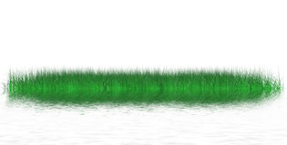 Island of juicy grass Stock Image