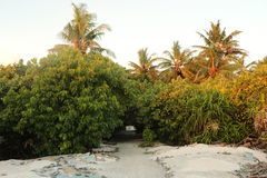 Island looking from the bech. Bushes to break strong wind Stock Images