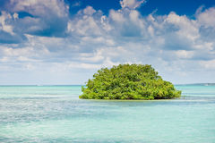 Island of mangrove green forest in a blue ocean Stock Images