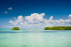 Island of mangrove green forest in a blue ocean Royalty Free Stock Images