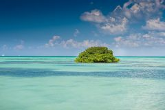 Island of mangrove green forest in a blue ocean Stock Photography