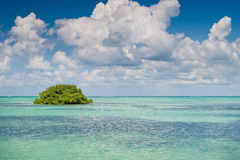 Island of mangrove green forest in a blue ocean Royalty Free Stock Photos