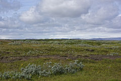 Island. Misty Landscape in Iceland.Fields Royalty Free Stock Images