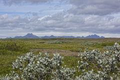 Island. Misty Landscape in Iceland,Geothemal Royalty Free Stock Image