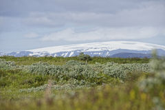 Island. Misty Landscape in Iceland.Geothemal Stock Photo