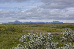 Island. Misty Landscape in Iceland.Geothemal Royalty Free Stock Photography