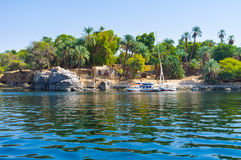 The island in Nile. The Kitchener's island is also known as the Island of plants, it's popular tourist destination in Aswan, Egypt Royalty Free Stock Images