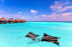 Island in ocean, overwater villas and a eagle ray Stock Image