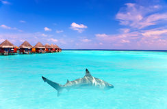 Island in ocean, overwater villas and a shark Royalty Free Stock Photo