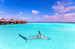 Island in ocean, overwater villas and a shark. In ocean Royalty Free Stock Photo