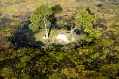 Island in the Okavango Delta seen from a heli. Beautiful small island in the Okavango Delta seen on a sunny day from a heli Stock Photography