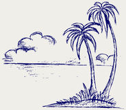 Island palm Stock Image