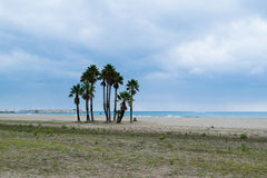 Island of the palm tree on the beach. Spain Stock Photography