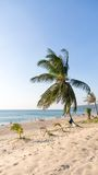 Island with palm tree on the beach Royalty Free Stock Photography