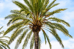 Island Palm Tree On Blue Sky. Green Island Palm Tree On Blue Sky Stock Images