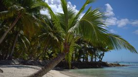 Island palm tree on sandy tropical beach. Dominican Republic.  stock footage