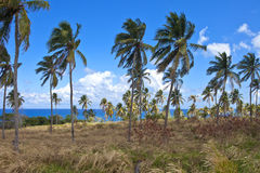 Island of palm trees Stock Images