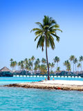 The island with palm trees in the ocean Royalty Free Stock Photography