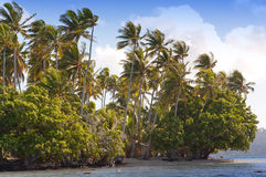 The island with palm trees in the ocean Stock Photos