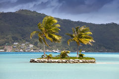 The island with palm trees in  ocean Royalty Free Stock Image