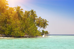 The island with palm trees in the ocean Royalty Free Stock Photos
