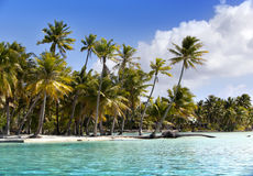 Island with palm trees in the sea.  Royalty Free Stock Photos