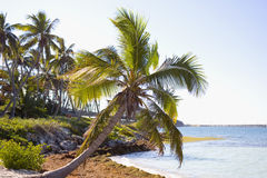 Island Palms Royalty Free Stock Photo