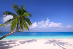 Island Paradise. Palm trees hanging over a sandy white beach with stunning blue waters on a perfectly sunny day Stock Images