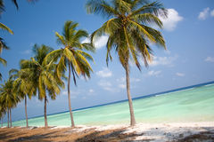 Island Paradise - Palm trees. Hanging over a sandy white beach with stunning turquoise waters Royalty Free Stock Photos