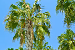 Island Paradise - Palm trees. Background Royalty Free Stock Photos