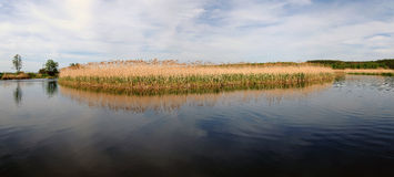 Island of reeds in the quiet waters of Rosie Royalty Free Stock Photo