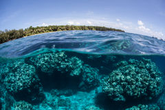 Island and Reef. Corals grow in the shallows along Palau's barrier reef in Micronesia. Coral reefs depend on clear, warm water and plenty of sunlight and thus Royalty Free Stock Photo