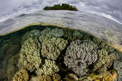 Island and Reef in Papua New Guinea. Soft corals thrive in the shallows near a small island in Papua New Guinea. This tropical region is known for its royalty free stock photo