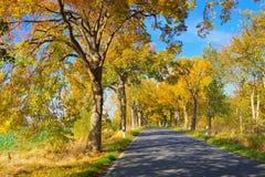 Island Ruegen, lime tree avenue. In autumn royalty free stock photo
