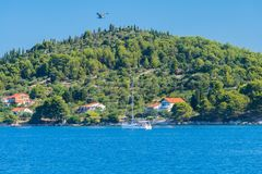 Island with sailing boat and seagull in the air. At daytime Stock Image