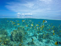 Island with shoal of fish and shark underwater Royalty Free Stock Image